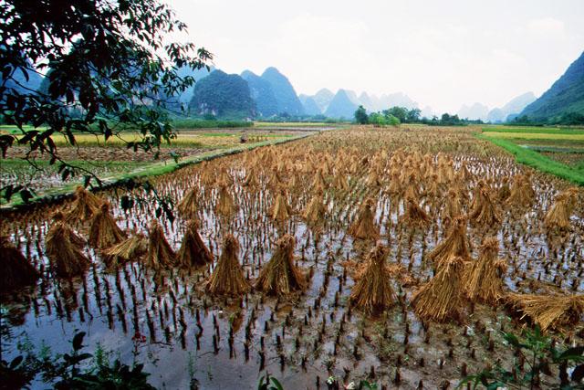 Reisfeld in China zwischen Bergen symbolisiert das Training vom Tai Chi