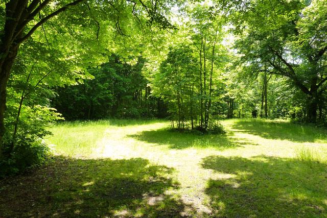 Qigong und Taijiquan Trainingsplatz im Göttinger Wald, Raum für Meditation.