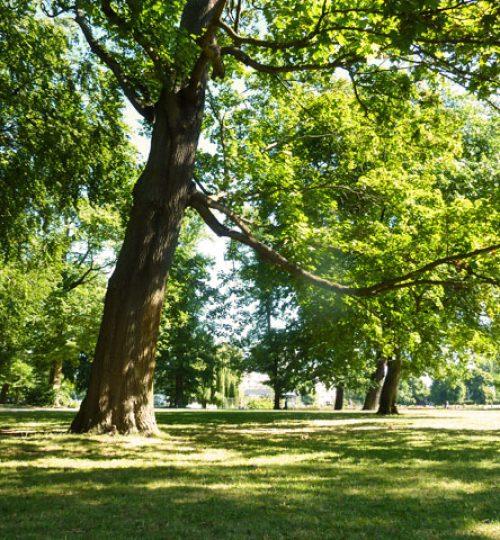 Bäume im Treptower Park, Berlin, ideal für das Training von Tai Chi und Qigong..