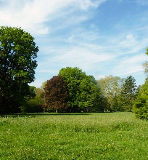In den Göttinger Schillerwiesen große Bäume, satte grüne Wiese, blauer Himmel, ideal um Qigong und Tai chi zu trainieren.