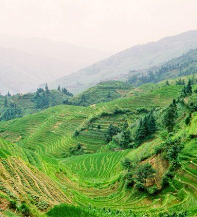 Die sanft an die Hänge geschmiegten Reisfelder sind wie das Fengshui in den chinesischen Bewegungskünsten.