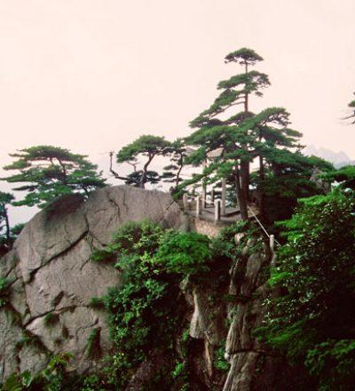 Steile Berge, Kiefern und frische Natur, ideal, um zur Ruhe, zum Qigong und Taijiquan (Tai Chi) zu finden.